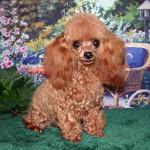 Puppy Rachel