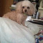 Rachel on bed